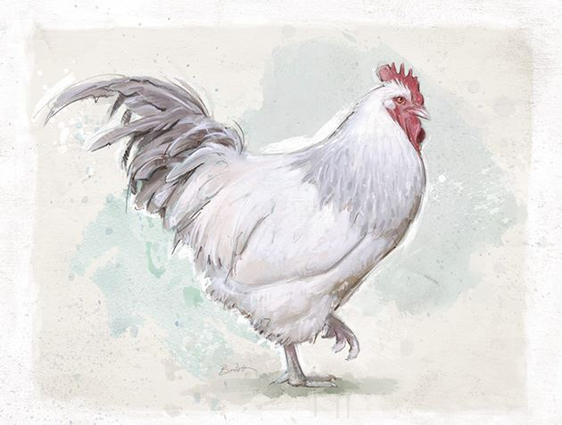 Picture of Painted Chicken